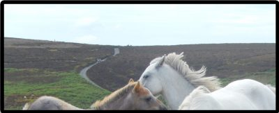 Horses cropped 1