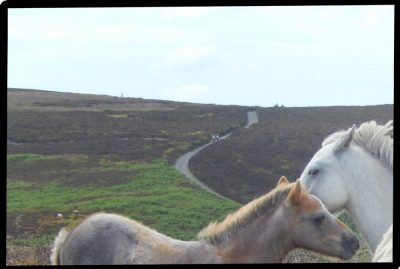Horses cropped 10