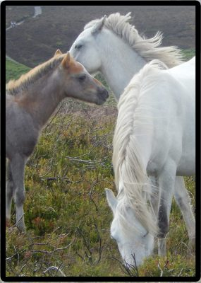 Horses cropped 2