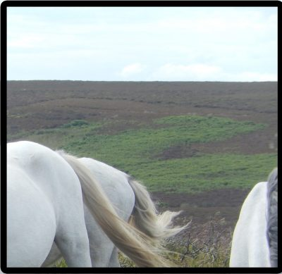 Horses cropped 4