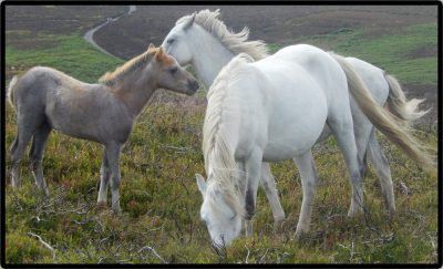 Horses cropped 5