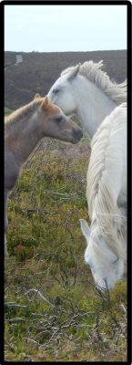 Horses cropped 6