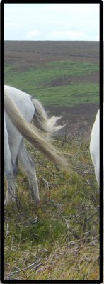 Horses cropped 7