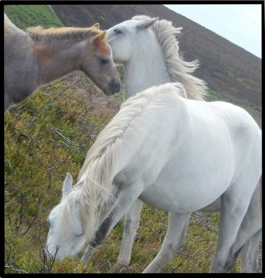 Horses cropped 8