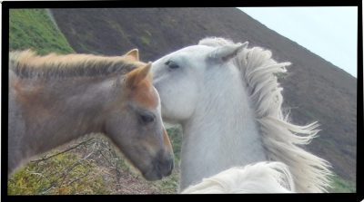 Horses cropped 9