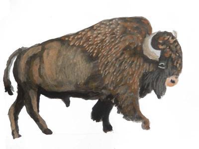 Bison in gouache