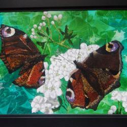Peacock butterflies framed view
