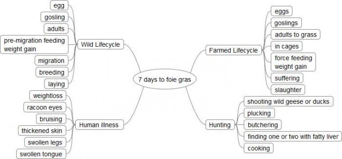 Mindmap of foie gras story