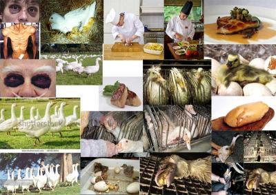 Foie gras moodboard