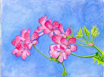 Branch ofpink geranium