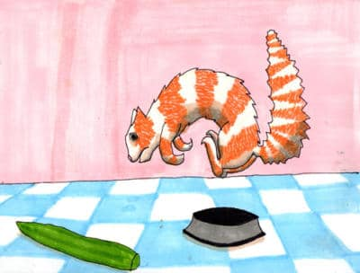 Cat scared of cucumber humour