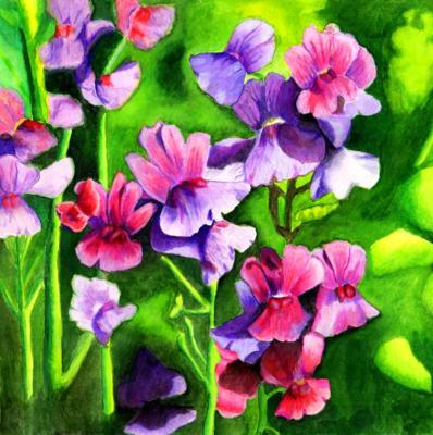 Pink and lilac nemesia flowers